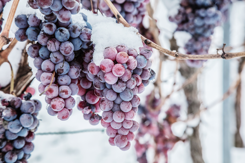 What about a glass of icewine?
